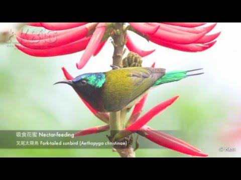 鳥喙和食性的關係 Bird Bills and Feeding Behaviours