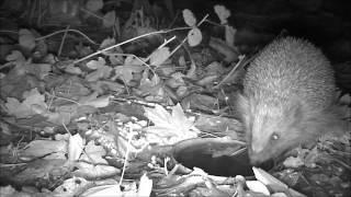 Wildlife Trail Camera - 27.11.2016