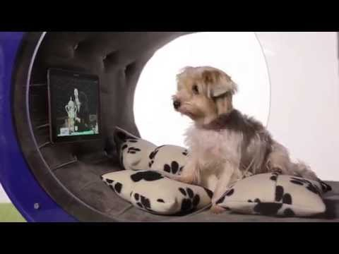 Crufts 2015 Samsung Dream Doghouse