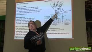 #937 Rosenvortrag - Wie pflanzt man eine Containerrose