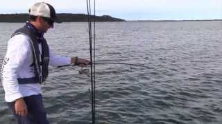 Mallacoota Australia  City pictures : Australian Salmon - Mallacoota lure Fishing