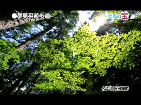 日本の宝妙高へ「笹ヶ峰高原・夢見平遊歩道」