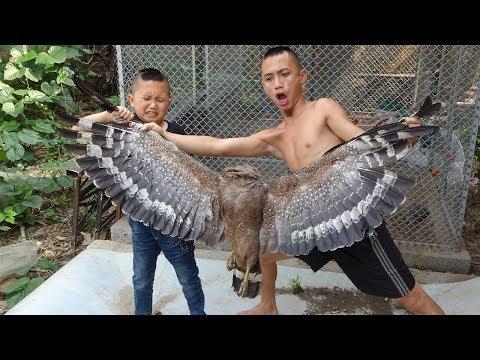 Thần Điêu Sào Xả Ớt - Sự Thật Về Loài Diều Hoa Và Lời Xin Lỗi Của Anh Em Tam Mao - Thời lượng: 7:21.