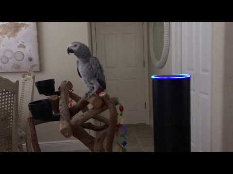 A Vocal African Grey Parrot Hilariously Instructs Her Amazon Echo to Turn On the Lights in the