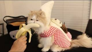 Cat Eating Banana