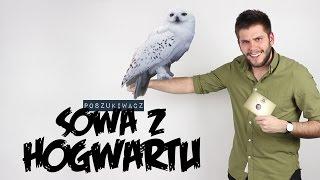 Video SOWA Z HOGWARTU | Poszukiwacz #184 MP3, 3GP, MP4, WEBM, AVI, FLV Agustus 2018