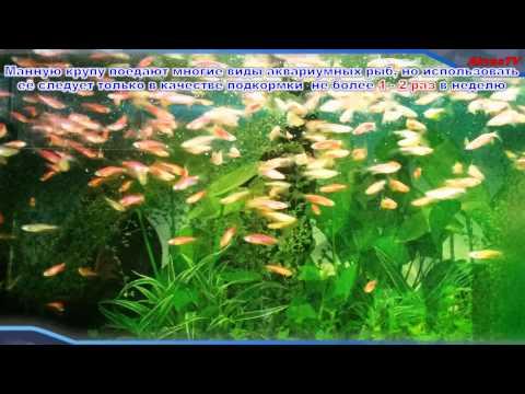 Корм для рыб аквариумных своими руками