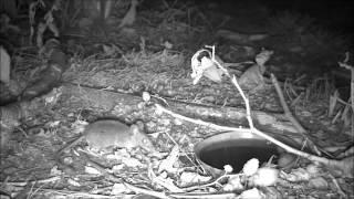 Wildlife Trail Camera - 1.9.2016
