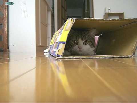 Un gato deslizándose con una caja por el suelo