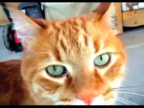 ecco i 5 segni per capire se il tuo gatto ti vuole bene!