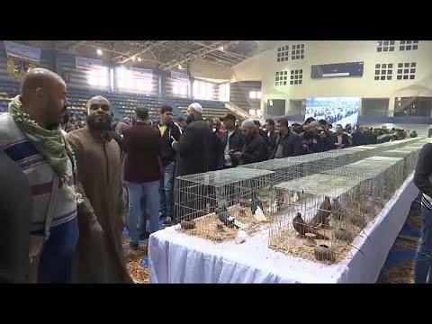 Tauben-Show in Kairo: Taube mit Locken und andere Sel ...