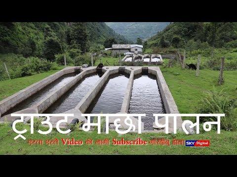 (ट्राउड माछा पालेर बार्सिक ५० लाख नाफा Agree Culture In Nepal....10 min)