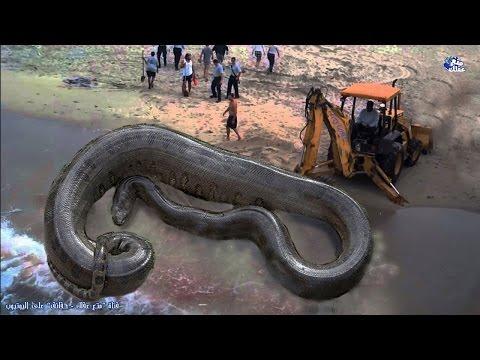 العرب اليوم - بالفيديو : حقائق رهيبة ومخيفة عن الثعابين