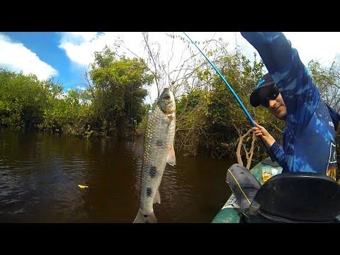 Pesca de piau com varinha de mão. Dicas, técnica e prática.