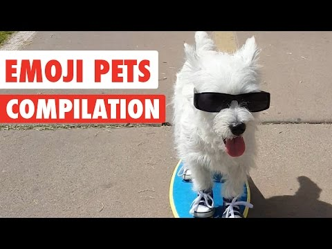 Emoji Pets Video Compilation 2017