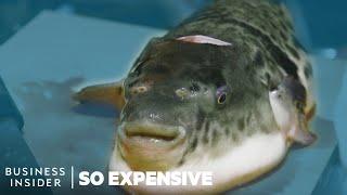 Video Why Tiger Fugu Is So Expensive | So Expensive MP3, 3GP, MP4, WEBM, AVI, FLV Agustus 2019