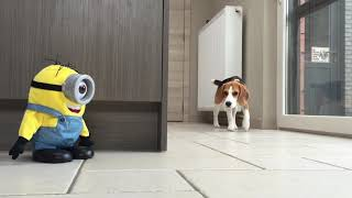 Dogs Vs Minion Prank : Funny Dogs Louie and Marie Ep8