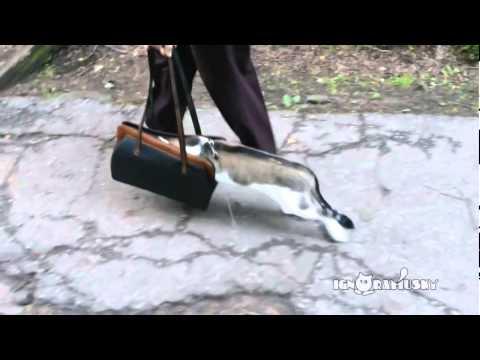 Зе кат фирст тиме оациде  Кот первый раз на прогулке. Так не страшно.