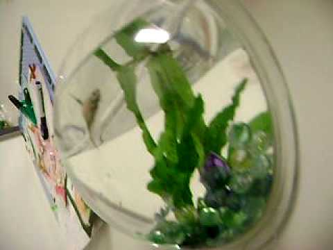 Aquatic Gardens Hanging Betta Bowl Customer