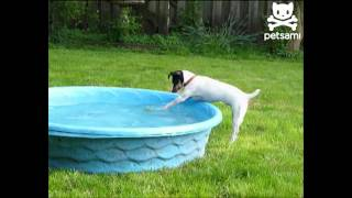 Careful Dog Reaches For Ball - Unexpected Ending :))