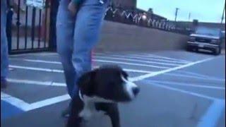 Smutny pies ze schroniska w końcu znajduje nowy dom! Jego reakcja wyciska łzy z oczu!