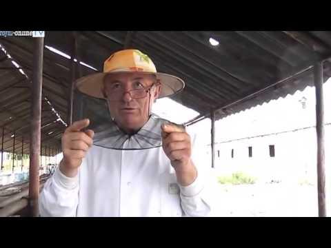 tampenia anului 2013 in apicultura   ursu ioan