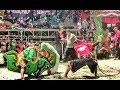 Download Lagu Solah APIK Tari Kuda Kepang Kembar Enam Jaranan Turonggo Wilis Live Mbadug Tanjunganom Mp3 Free