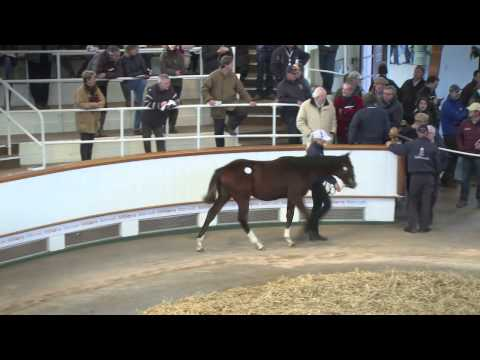Tattersalls December Foal Sale Day 4 2014