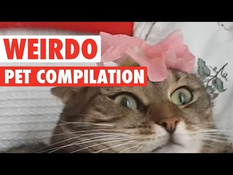 WATCH: Pets Being Weirdos