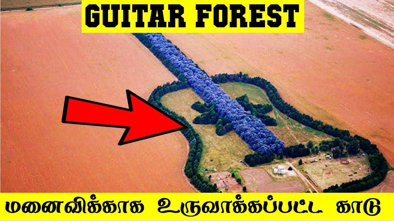 மனைவிக்காக உருவாக்கப்பட்ட காடு   Guitar Forest   5 Min Videos