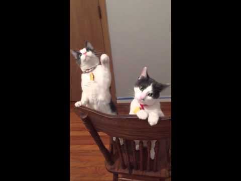 Cats react to their first ceiling fan rebrn this is amazingly adorable mozeypictures Image collections