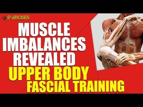 Muscle Imbalances Revealed Upper Body Fascial Training
