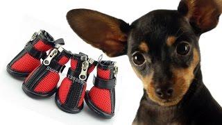 Одежда для собак//Обувь для Той терьера