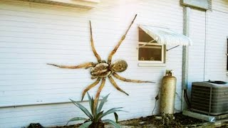 12 World's Largest Spiders full download video download mp3 download music download