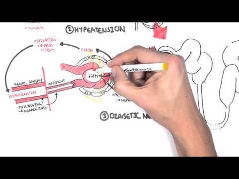 Pathophysiology of Chronic Kidney Disease
