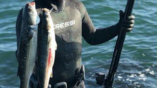 Zıpkınla kefal avı - Çanakkale Biga