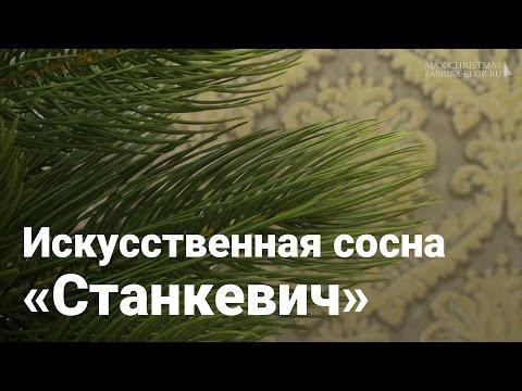 Max-Christmas сосна Станкевича литая