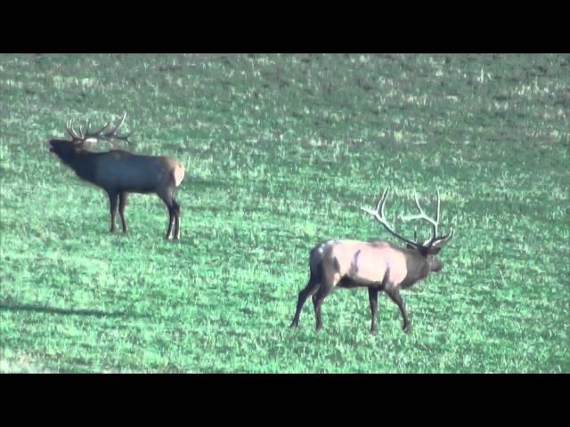 2015 Elk Video