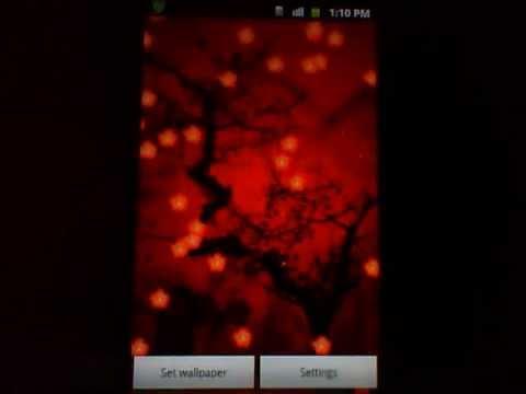 Video of Beloved Plum Blossom LWP
