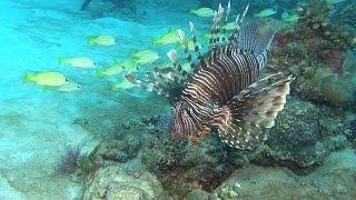 Die Insel Mauritius liegt 900km östlich von Madagaskar. Die Insel mit einer Fläche von etwa 2000qkm bietet abwechslungsreiche...