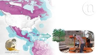 One of the major threats to biodiversity worldwide is international trade. The production of goods for export often involves logging, mining, fishing or other ...
