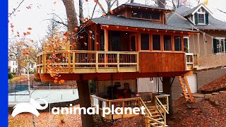 Family Can't Get Enough Of This Glamorous Glamping Getaway | Treehouse Masters by Animal Planet