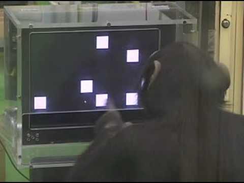 黑猩猩的短暫記憶能力,竟然打敗大學生?!
