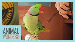 Training Our Alexandrine Parakeet by Animal Wonders