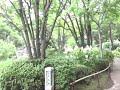 今日のお天気 東京江戸川区  行船公園 2013/6/24(月)