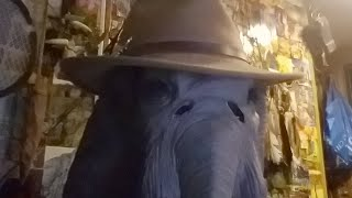 Video Monday Mammoth and Forrest Fenn Misfits MP3, 3GP, MP4, WEBM, AVI, FLV Oktober 2018