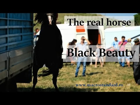 The Real Horse Black Beauty