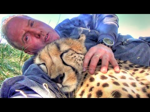 他在樹下午睡的時候突然有隻獵豹衝過來…接下來發生的事就算重看我還是很難相信!