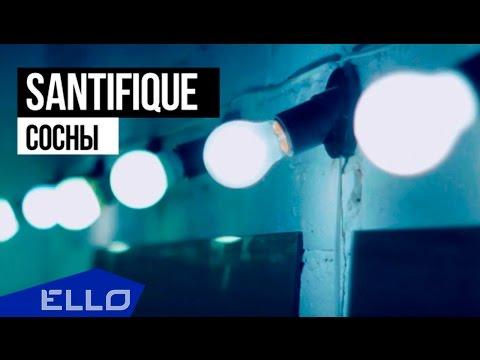 SANTIFIQUE - Сосны