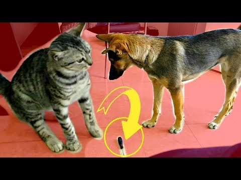 CAT GETS DOG IN TROUBLE! Funny Animals Cat vs Dog!